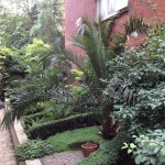 Sheltered garden with formal hedges and palms