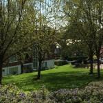 Springtime in Wimbledon