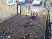 Large shrub stumps and roots to be removed