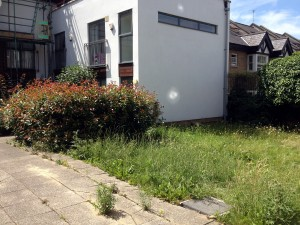 Overgrown grass at new site in Streatham