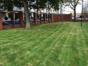 Freshly cut grass at new contract