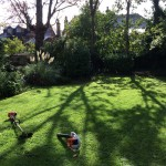 Small garden in Tulse Hill with freshly cut grass