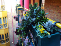 Winter Planting of Window Boxes on Rail