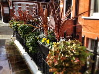 Winter Planting of Window Boxes