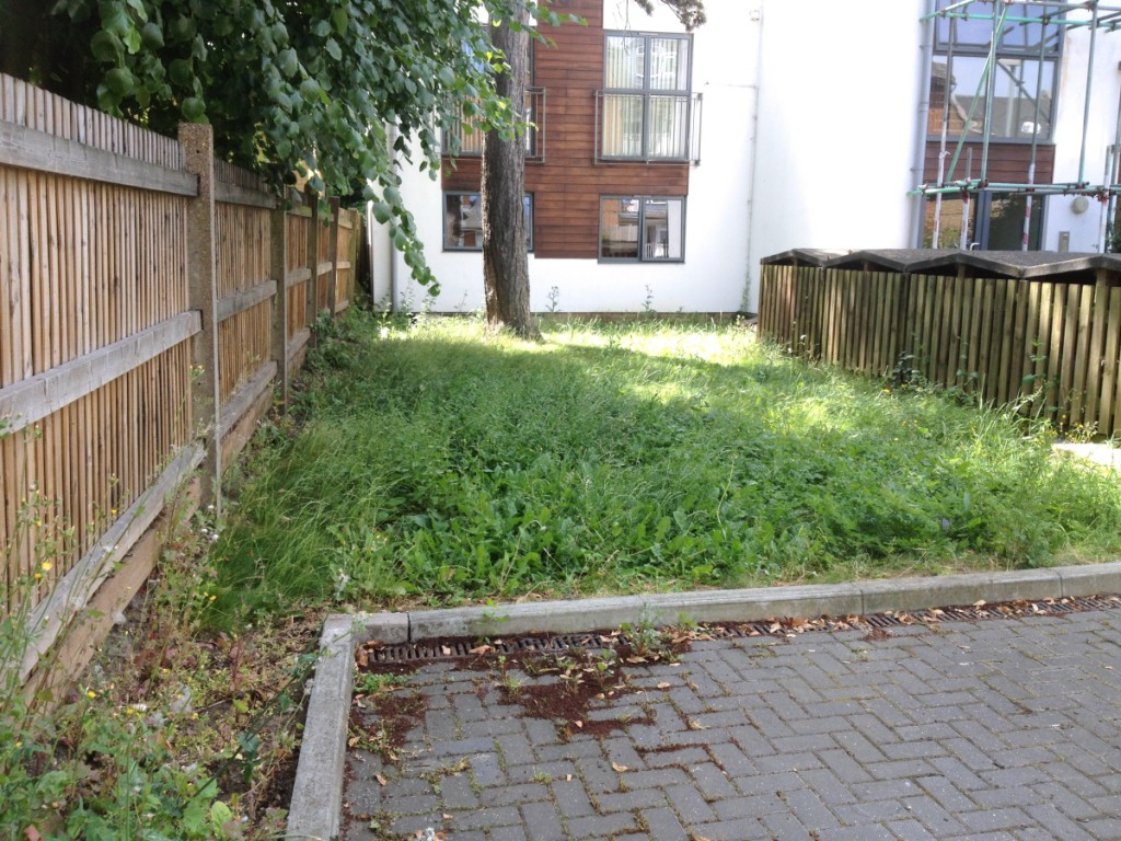 Overgrown grass at new contract in Streatham