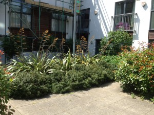 Overgrown shrubs at Streatham site