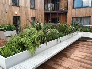 Rooftop garden, phormiums and bamboo