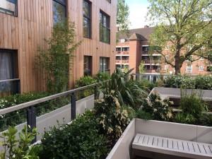 Rooftop garden, phormium, bamboo